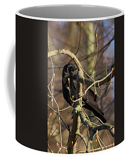 Coffee Mug featuring the photograph Springtime Crow by Bill Wakeley