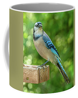 Springtime Jay Coffee Mug by Jim Moore