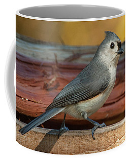 Coffee Mug featuring the photograph Springtime Tufted Titmouse by Jim Moore