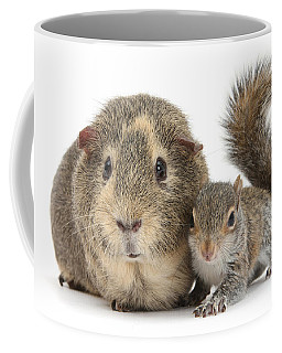 Squirrel And Guinea Coffee Mug