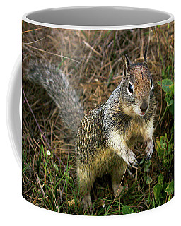 Squirrel At Moonstone Beach, California 001 Coffee Mug