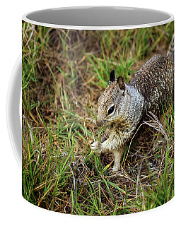 Squirrel At Moonstone Beach, California 002 Coffee Mug