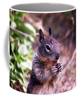 Squirrel At Moonstone Beach, California 003 Coffee Mug