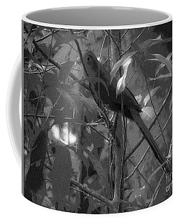 Squirrel Cuckoo  Coffee Mug