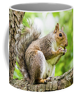 Squirrel Eating On A Branch Coffee Mug