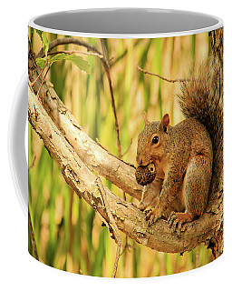 Squirrel In A Tree In The Marsh Coffee Mug