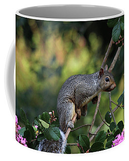 Coffee Mug featuring the photograph Squirrel Portrait by Trina Ansel