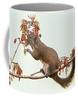 Squirrel With A Treat Coffee Mug by Myrna Bradshaw