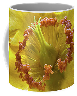 St Johns Wort Flower Centre Coffee Mug