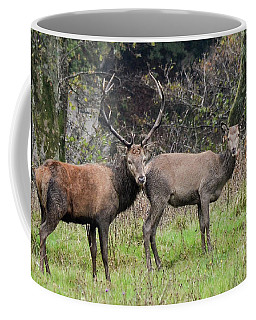 Stag And Doe  Coffee Mug