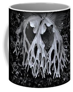 Coffee Mug featuring the photograph Staghorn Fern by Wayne Sherriff