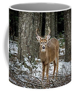 Staring Buck Coffee Mug