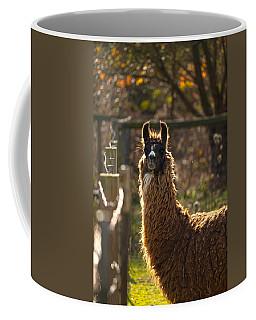 Staring Llama Coffee Mug