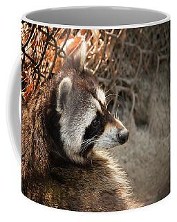 Staring Raccooon Coffee Mug
