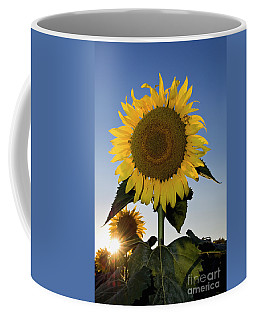 Starlight And Sunflowers - D008092 Coffee Mug