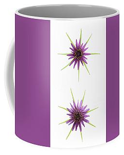 Stars Of Salsify Coffee Mug