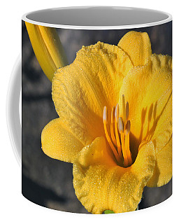 Coffee Mug featuring the photograph Stella De Oro And Morning Dew by Sheila Brown