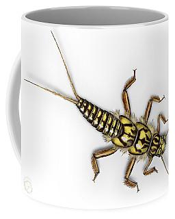 Stonefly Larva Nymph Plecoptera Perla Marginata - Steinflue -  Coffee Mug