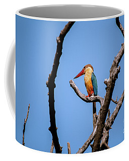 Stork-billed Kingfisher Coffee Mug