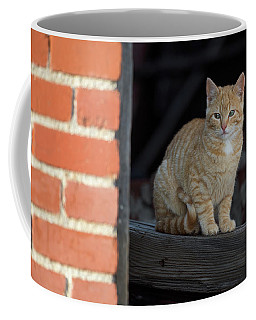 Street Cat Coffee Mug by Scott Warner