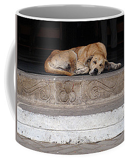Street Dog Sleeping On Steps Coffee Mug