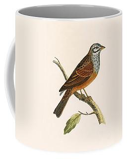 Striolated Bunting Coffee Mug