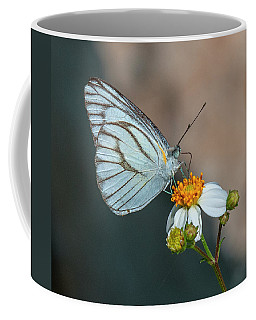 Striped Albatross Butterfly Dthn0209 Coffee Mug