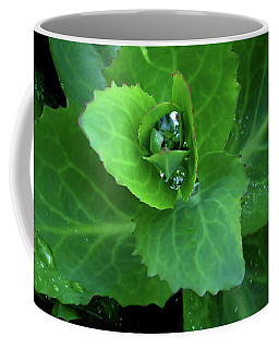 Succulent After The Rain  Coffee Mug