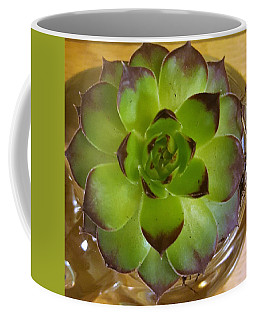 Succulent Coffee Mug by Jim Harris