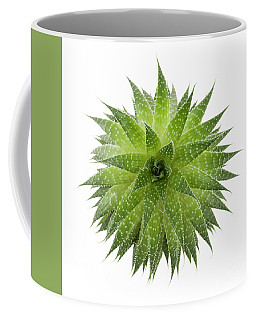Coffee Mug featuring the photograph Succulent Plant by Elena Elisseeva