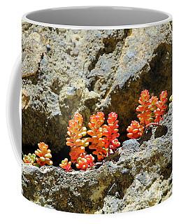 Succulents On The Oregon Coast Coffee Mug