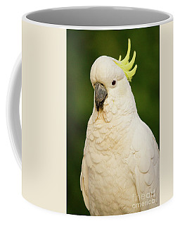 Sulphur Crested Cockatoo Coffee Mug by Craig Dingle