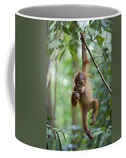 Sumatran Orangutan Pongo Abelii One Coffee Mug