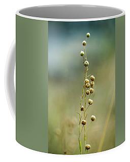 Seeds Coffee Mugs