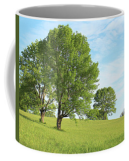 Coffee Mug featuring the photograph Summer Trees by Melinda Blackman