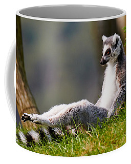 Coffee Mug featuring the photograph Sun Bathing Ring-tailed Lemur  by Nick  Biemans