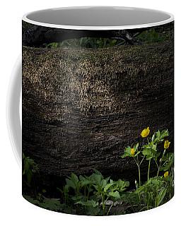 Sun Beam On Log Coffee Mug