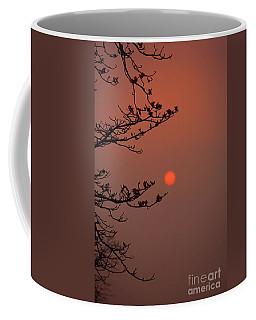 Sun Blossoms Nature Asia  Coffee Mug