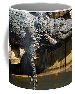 Sunbathing Gator Coffee Mug