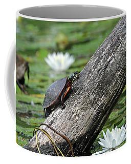 Turtle Sunbathing Coffee Mug by Glenn Gordon