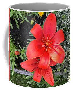 Sunbeam On Red Day Lily Coffee Mug