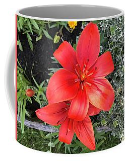 Sunbeam On Red Day Lily Coffee Mug