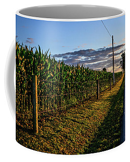 Sundrenched Cornfield Coffee Mug