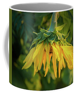 Coffee Mug featuring the photograph Sunflower In Evening Light by John Brink