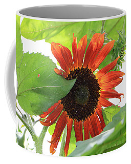 Coffee Mug featuring the photograph Sunflower In The Afternoon by Rick Morgan