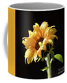 Sunflower Isloated On Black Coffee Mug