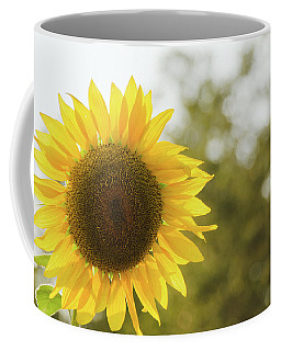 Coffee Mug featuring the photograph Sunflowers 12 by Andrea Anderegg