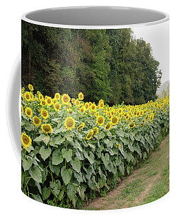 Coffee Mug featuring the photograph  Sunflowers 6 by Andrea Anderegg