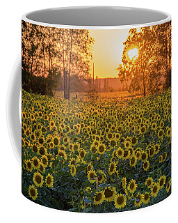 Sunflowers At Sunset Coffee Mug by Cheryl Baxter
