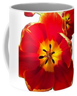 Sunkissed Tulips Coffee Mug